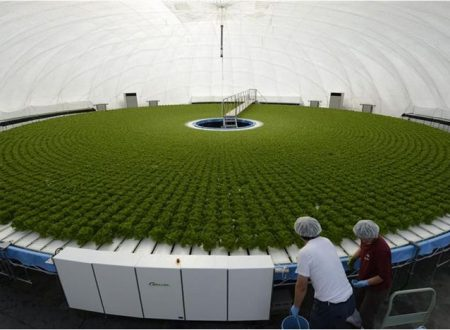 Hydroponic farm Japan Gandpa Dome