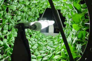 Rotary Hydroponic Systems and Urban Farming reduces transportation, packaging, spoilage, pollution, water