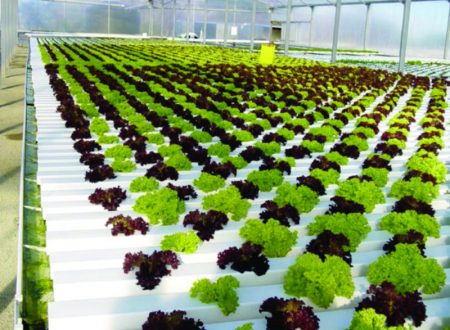 Advantages and Disadvantages Hydroponics and Soilless Culture