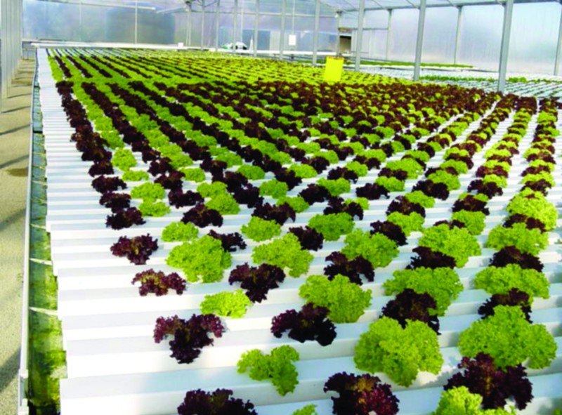 Advantages and disadvantages hydroponics and soilless for Garden soil meaning