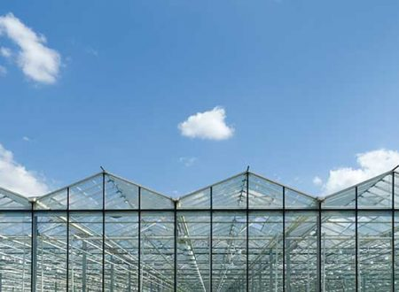 Greenhouses Hydroponic or Aeroponic growing