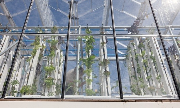 Largest urban farming project in Europe