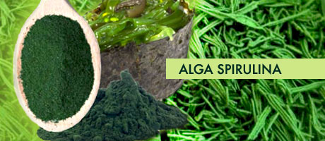lipid (fats). There are over 100,000 species of algae, and some algae ...