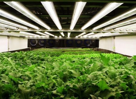 Video Vertical Farm: Farm of the Future Uses No Soil and 95% Less Water
