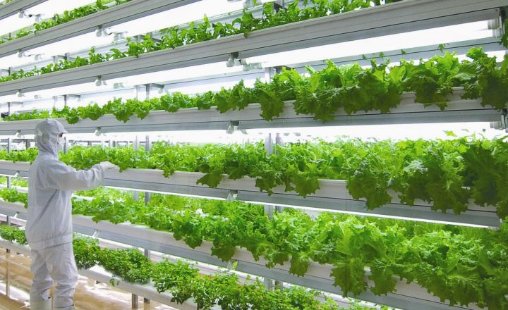 Best websites specializing in hydroponic systems