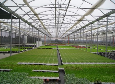 Europe:Energy effieiency mesasures in protected horticulture